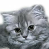 Товары для кошек и котов