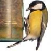 Аксессуары для птичьих клеток