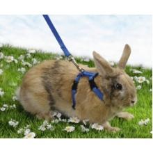 Pet Pro ШЛЕЯ для кролика с поводком