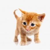 для котят и кормящих кошек